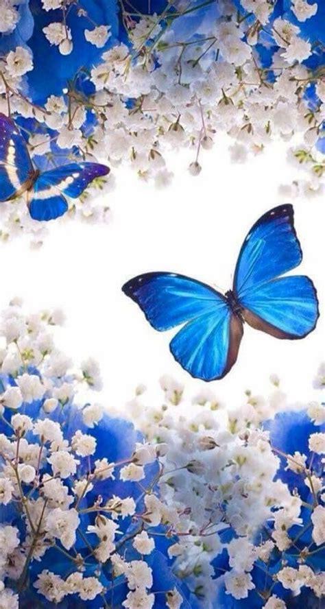butterflies   butterfly wallpaper blue butterfly