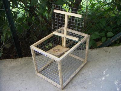 piege a pigeon fait maison pi 232 ge 224 oiseaux pas cher oiseaux noyon