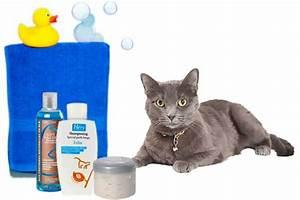 Laver Un Chaton : laver un chat ou un chaton le produit le plus efficace ~ Nature-et-papiers.com Idées de Décoration