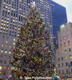 xmas in times square new york ny picture