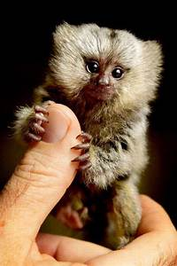 14 Unbelievably Tiny Animals You NEVER Even Knew Existed!