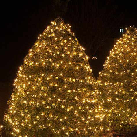 net lights  tree wraps