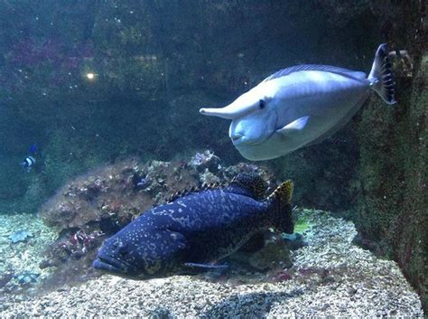 aquarium porte doree aquarium porte dor 233 e 6 picture of aquarium tropical de la porte doree tripadvisor