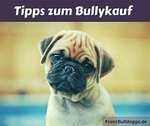 Hundebekleidung Französische Bulldogge : franz sische bulldogge kaufen das solltest du beachten ~ Frokenaadalensverden.com Haus und Dekorationen