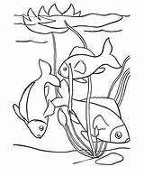 Pond Fish Coloring Swim Swimming Clipart Drawing Water Sheets Template Sea Sketch Winter sketch template