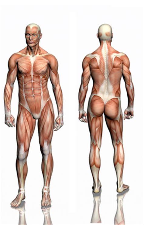 guide musculation exercices programmes de musculation pour la maison