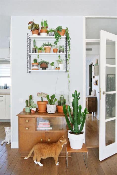 decorez avec les plantes grasses dinterieur