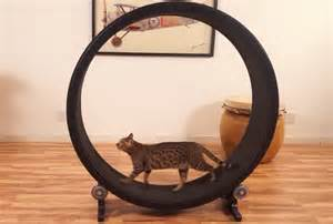 cat exercise wheel one fast cat will help keep your moggy s motor running