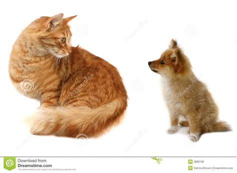 katze gegen hund stockfoto bild