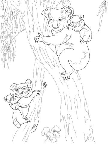 koala moms  babies coloring page supercoloringcom