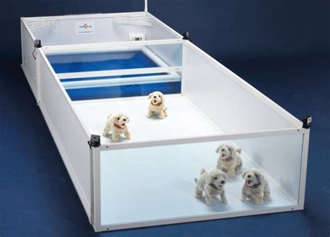 concept  whelping boxes dog room ideas