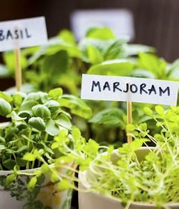 Schöne Pflanzen Für Den Garten : sch ne pflanzen f r garten und balkon ~ Michelbontemps.com Haus und Dekorationen