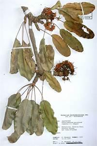 Was Ist Ein Herbarium : herbarium wikipedia ~ A.2002-acura-tl-radio.info Haus und Dekorationen