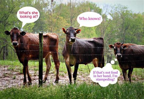 funny animal farm quotes quotesgram