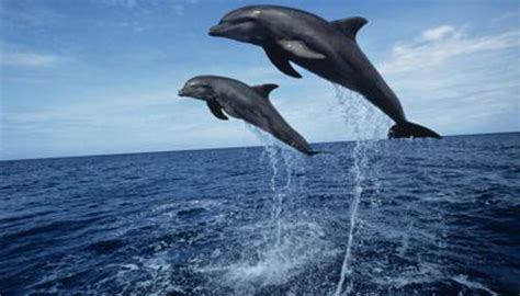 temperature  water  dolphins   animals