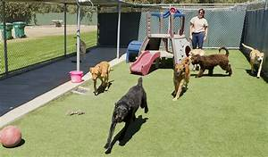 the 25 best dog boarding san diego ca services and facilities With top dog sitters