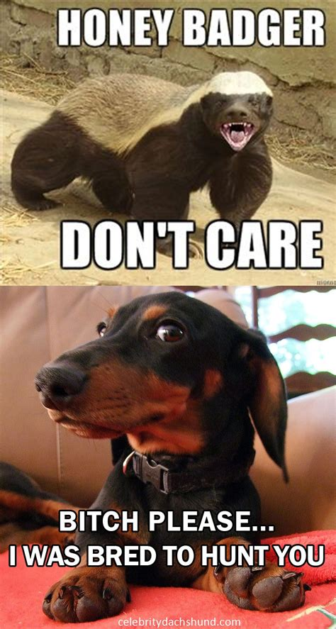 Wiener Dog Meme - it s funny because it s true dachshund doxie badgerdog i love doxies pinterest