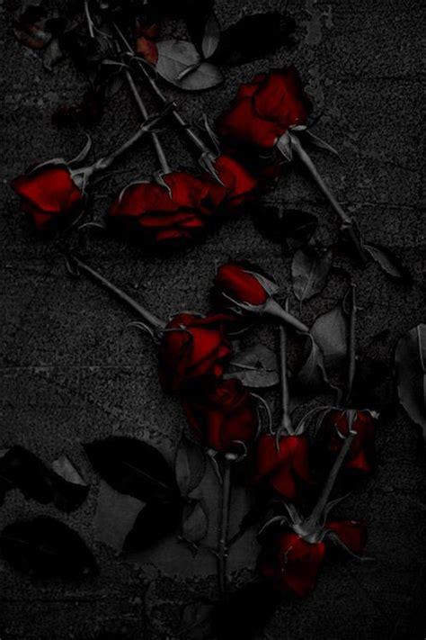 ardente nirvana rose wallpaper dark beauty art