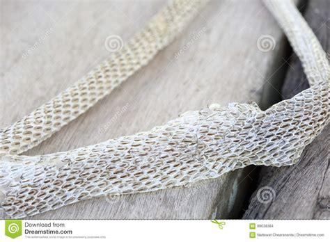brown snake skin shedding white shedding snake skin on wooden floor stock