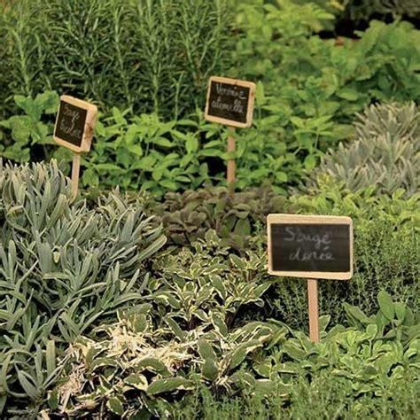 herbes aromatiques en cuisine les herbes aromatiques bio en cuisine à marseille