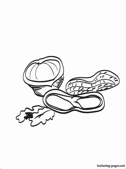 Nut Coloring Pages Printable Drawing Line Designlooter