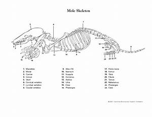 Skeleton Lesson Plans  U0026 Worksheets Reviewed By Teachers