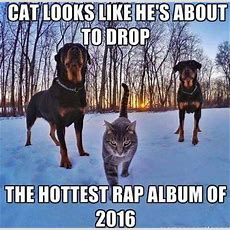 Top 25 Thug Life Cat Memes  Quotes And Humor