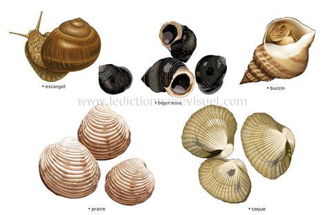 cuisine anglais alimentation et cuisine gt alimentation gt mollusques image
