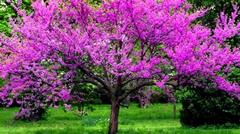 beautiful small trees for garden top 10 beautiful small trees to plant near house with small spaces