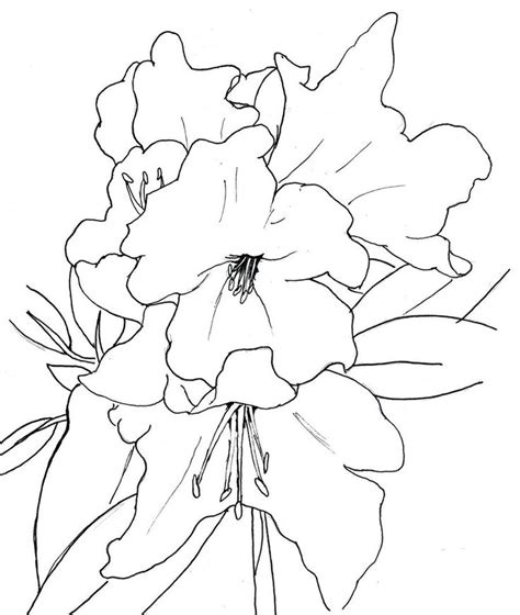 how to draw a rhododendron rhododendron finished by forgetsanity art coloring pages doodles