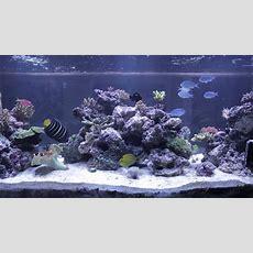 Reef Tank Aquascape Youtube