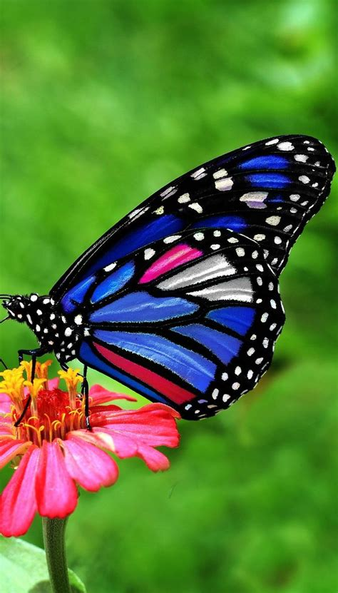 About Wild Animals: A beautiful butterfly | Butterfly ...