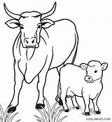 Cow Coloring Calf Pages Drawing Line Printable Cute Cool2bkids Animal Cows Cartoon Sheets Funny Farm Colouring Baby Drawings Easy Simple sketch template