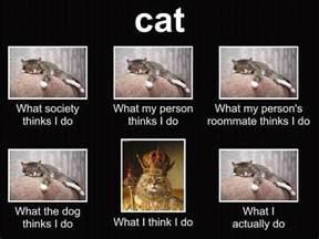 cat what society thinks i do s