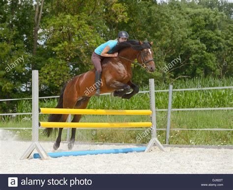 junge frau die auf ein connemara pony hengst ueber einen