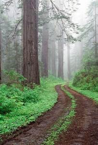 green forest on Tumblr