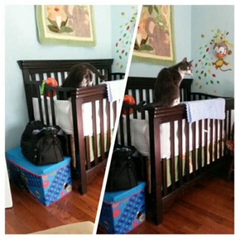 Keep Cats Out Of Crib keeping the cats out of the crib december 2014