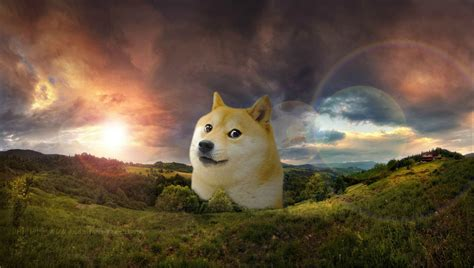 [48+] HD Doge Wallpaper on WallpaperSafari