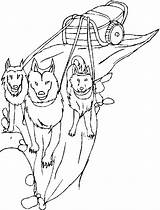 Sled Dog Dogs Coloring Pages Printable Drawing Template Getcolorings Sketch Getdrawings sketch template