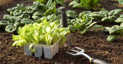 manger cru recettes cuisine que faire en mai au potager association manger santé bio