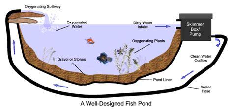 choosing   filter   pond water gardens