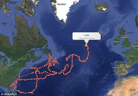 25 best ideas about great white shark tracker on www hautelook big great white