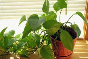 plants poisonous to cats 10 household plants that are dangerous to dogs and cats