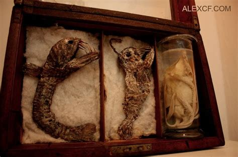 Old Bodies From Strange Creatures Were Discovered In A