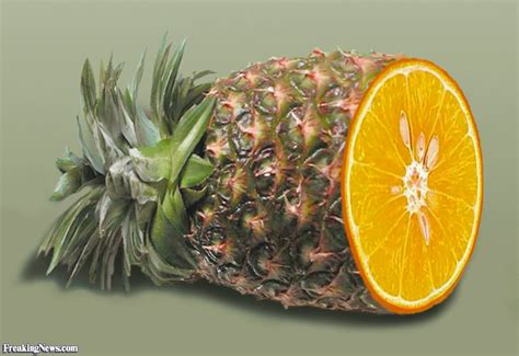 orange hybrid fruit pineapple orange pictures freaking news