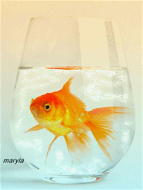Animated Fish Aquarium Wallpaper Mobile - free animated gold fish mobile wallpaper by maryla75 on