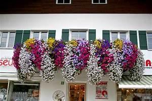 Blumen Für Den Balkon : pin blumen f r den balkon on pinterest ~ Lizthompson.info Haus und Dekorationen