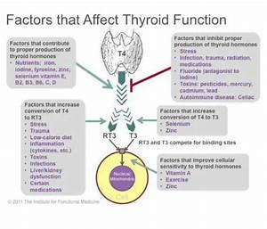 Take Care of your Thyroid The purpose of your thyroid ...