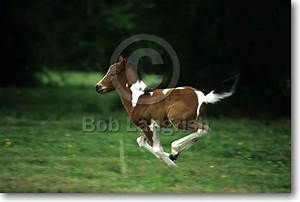 Bob Langrish Equestrian Photographer: Images