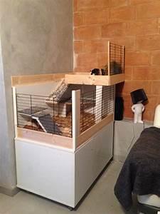 Cage A Cochon D Inde : cage cochon d 39 inde animaux cochon d 39 inde ~ Dallasstarsshop.com Idées de Décoration